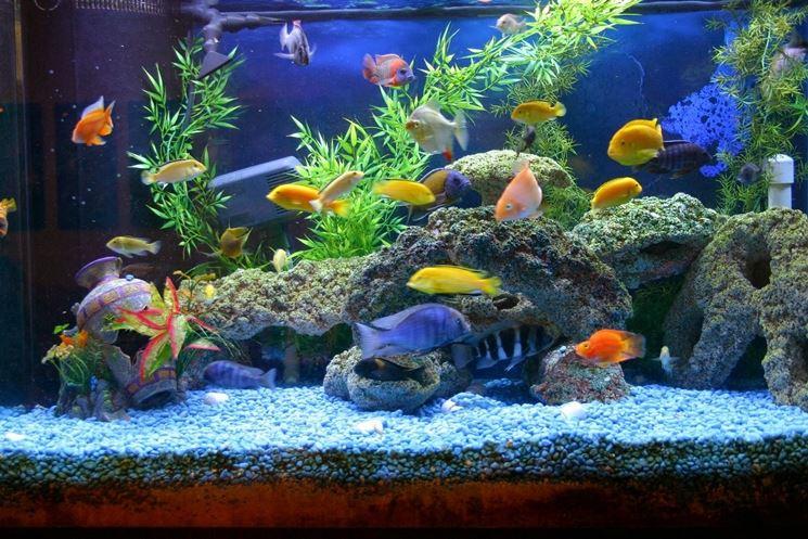 negozio acquari online vendita di piante strumenti e